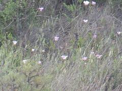 CIMG6390 (kazadmanesh) Tags: و بهار خشکسالی