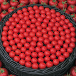 Circle of tomatoes thumbnail