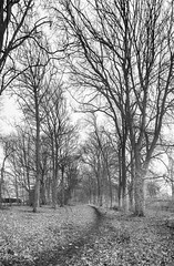 A North Yorkshire Woods. (johnhjic) Tags: johnhjic nikon d90 ir northyorkshire wood woods tree trees helperby path woodland uk yorkshire mud leves trail stick sticks mood empty dark greatbritain blackwhite black white bw england english