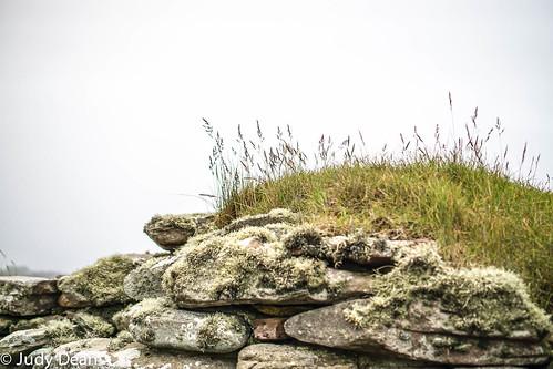 judydean 2017 sonya6000 orkney stone wall moss lichen grasses mist cleanair cool