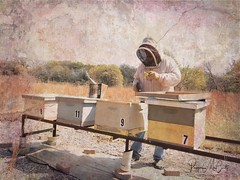 Checking the hives. First inspection of the spring in north central Texas. #stackablesapp (peppermcc) Tags: stackablesapp