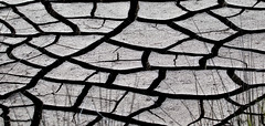 Merritt Island National Wildlife Refuge National Park Service Florida (watts_photos) Tags: merritt island national wildlife refuge park service florida dry cracks crack mud black white bw nwr creek weather abstract photo