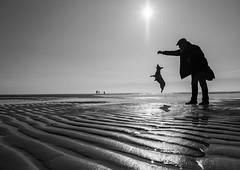 jump (Georgie Pauwels) Tags: beach jump dog doglife play public sun northsea