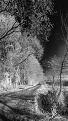 A North Yorkshire Blue sky track. (johnhjic) Tags: johnhjic nikon d90 ir helperby northyorkshire wood woods woodland woodlands beck path track sky landscape white black blackandwhite greatbritain blackwhite bw dark stick sticks england english gb stream mud