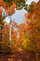 Orange (StephanExposE) Tags: algonquin canada stephanexpose parc park nature forest forêt arbre tree autumn automne feuille leaf orange canon 600d 1635mm 1635mmf28liiusm