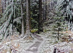 Between the trunks (xDigital-Dreamsx) Tags: winter snow frost frozen freeze trees countryside country nature woodland woods forest wald fence pine pinforest scotland landscape scenery scenic tranquility tree trail track tranquil serene weather storm rural