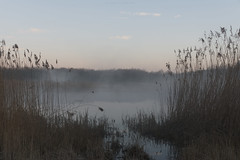 (esmeecadoni) Tags: woods water europe netherlands beautifulearth sky sony sunlight outdoor simple simplicity minimal minimalistic light littlethings mist holland morning fog photography landscape lake nature