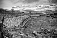Rochdale Countryside (Missy Jussy) Tags: rochdale countryside landscape lancashire northwest england tree lonetree sky clouds walls drystonewalls fence piethornevalley ogden mono monochrome blackwhite blackandwhite bw walkinglandscape