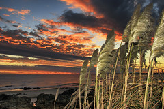 Foxtails at sunset (wesp2011) Tags: foxtails sunset colotfulsky rocks cluds ocaso atardecer colasdezorro cielocolorido nubes