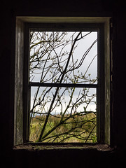 Outside In (Feldore) Tags: window old glassless broken farmhouse omagh abandoned derelict cottage irish northern ireland tyrone glenhordial feldore mchugh em1 olympus 1240mm branches trees field nature spooky