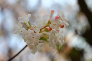 Gifts of Spring