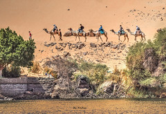 Trail of Camels (Nadia Rifaat) Tags: camel outdoor desert nile river aswan nubia soheil island egypt people