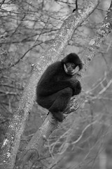 pourquoi je suis tout seul (rondoudou87) Tags: monkey singe pentax k1 monochrome nature natur noiretblanc noir blanc black blackwhite wildlife wild white smcpda300mmf40edifsdm parc zoo reynou