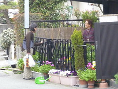 Neighbour greeting neighbour (seikinsou) Tags: japan garden spring pot osaka neighbour greeting
