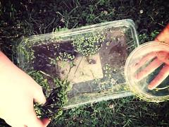 6:15:365 (Megan Fraser) Tags: carolina 2013 uploaded:by=flickrmobile flickriosapp:filter=mammoth mammothfilter hunsbergerwoods