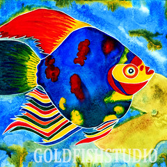 Tropical fish square card preview (Goldfishstudio) Tags: sea fish tropical aquatic