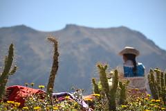 (DOCTELA) Tags: cactus woman peru inca del mujer mulher cruz mulheres condor mujeres peruvian peruana chinchero vendedoras cabanaconde peruanas