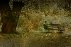 Solitude (Loran de Cevinne) Tags: parc jardin pentax justpentax street issylesmoulineaux banlieueparisienne ilestgermain lorandecevinne banc people personne personnage arbre
