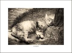 en voyage... (Brigitte Lorenz) Tags: travel cats animals sepia morocco