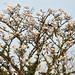 Folto gruppo di uccelli appollaiati su un albero