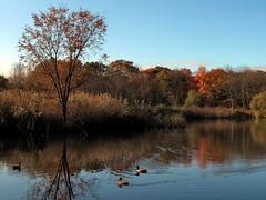 Autumn in the Bronx (Eddie C3) Tags: newyorkcity bronx vancortlandtlake vancortlandtpark canonpowershotg10