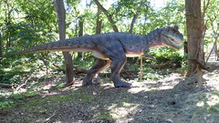 Dinosaurs Alive (Carnotaurus): The Lost Valley, Henry Doorly Zoo (ali eminov) Tags: animals nebraska omaha dinosaurs zoos cretaceous henrydoorlyzoo carnotaurus extinctanimals thelostvalley dinosaursalive geologiceras extinctions