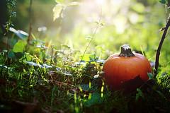 Happy Autumn! (ShaleyRene.) Tags: autumn sun sunlight fall halloween nature leaves forest lens pumpkin october lensflare flare