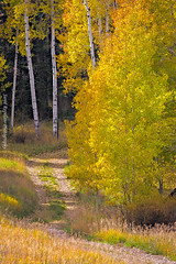 Winding Road (Jared Ropelato) Tags: autumn wild southwest west art fall valleyoffire nature beauty landscape desert pacific outdoor south conservation environmental canyon toad page pacificnorthwest environment sw hoodoo zion wilderness slot stools toadstools pnc conserve antelop 2013 ropelato jaredropelato ropelatophotography
