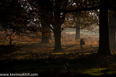 Photographer walks through the trees at Richmond Park, autumn 2013 (www.kevinoakhill.com) Tags: pictures park camera wood november autumn trees red orange sun colour tree london beautiful leaves yellow thames canon woodland walking lens eos photo leaf amazing woods kevin ray colours photographer photos oakhill walk gorgeous tripod picture royal richmond 7d borough 23 rays today 23rd upon richmondpark 2013 besautiful vision:mountain=051 vision:sunset=0591 vision:outdoor=0642 vision:sky=0975 vision:clouds=0776