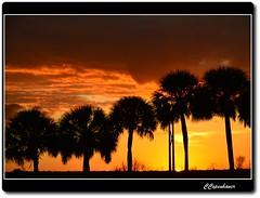 Diminishing Light (oar_square) Tags: park sunset nature landscape state florida gainesville palmtrees paynes statepreserve paynesprairiepreservestatepark