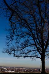 Two Winter Tree and very blue sky (Traveller_40) Tags: winter tree tower laub dry turm äste baum augsburg trocken bismarkturm steppacherhöhe