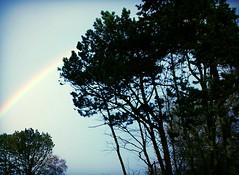 (Marie EG) Tags: autumn tree skne rainbow sweden sdersltt d3000