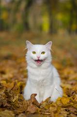 Autumn cat (Nikita Vadimovitch) Tags: autumn fall animals cat кошка животные кот smalldof