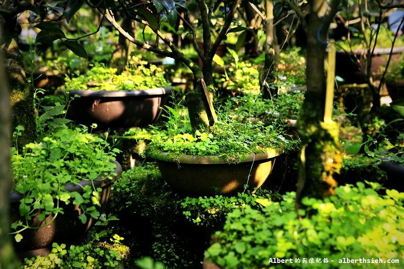 桃園大溪.大溪茶花園