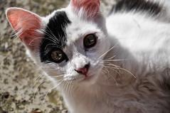 La bella Lili (Sbisse Fayna) Tags: cat kitty gata lili gatita