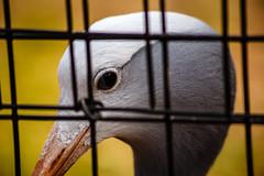 ZooAtanta_22Feb14_00347.jpg (fredstrobel) Tags: atlanta usa birds animals ga georgia unitedstates places zooatlanta wildanimals