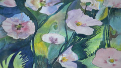 Pinked Poppies (amanda.parker377) Tags: pink poppy watercolourpainting