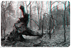 Bossen Ermelo 3D Small (4 of 12) (Pure Natural Ingredients) Tags: trees red 3d bomen woods thenetherlands cyan anaglyph ermelo bossen nikond7000