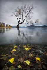 Lake Wanaka -Over Under (Luke Austin) Tags: autumn newzealand tree fall approved wanaka lakewanaka phototour