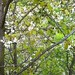 Cape Play spring tree climbing