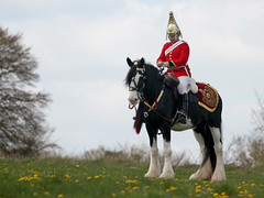 Household Cavalry... (Colonel Killgore) Tags: horse army british cavalry