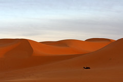Erg Chebbi, Sahara Desert, Marocco (bcmng) Tags: africa sahara landscapes desert agadir oasis atlasmountains fez atlas marocco marrakech casablanca fes gladiator rabat meknes tinghir erfoud dromedar saharadesert todra quarzazate ergchebbi aitbenhaddou todragorge arfoud gladiatorsite aidbenhaddou africalandscapes frankdinger marokkorundreise maroccolandscapes maroccobustrip maroccooasis gladiatormarocco