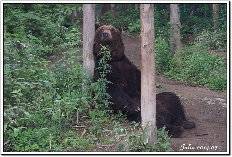 熊牧場 (6)