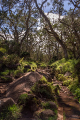 Plaine des Tamarins (Thibaud Chanfray) Tags: wood light tree reunion forest way island lumire ngc ile ombre des lumiere foret cirque runion chemin fort mafate le plaine magique tamarins enchante natureandnothingelse