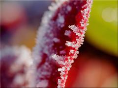 Ice crystals (Ostseetroll) Tags: deu deutschland geo:lat=5403845055 geo:lon=1068931103 geotagged pönitzamsee scharbeutz schleswigholstein makroaufnahme macroshot winter eiskristalle icecrystals