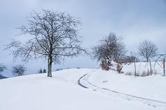 IMGP5709 (laurec.) Tags: luge neige oppenau