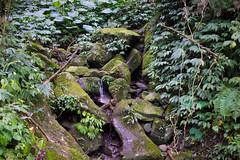 小溪 (momodie81) Tags: 馬武督 森林 探索 溪 台灣 新竹 關西