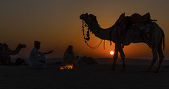aanch ro taap chokho hai ! ( FP explore on 2017/03/03) Thankyou all. (durgeshnandini) Tags: explore camel sanddunes woman family jaisalmer india rajasthan silhouette fpexploredon03032017 shivji