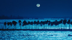 58784 (manhhung) Tags: travel blue sea sky moon tree latinamerica water silhouette evening bay puertorico background jetty nobody palmtree caribbean backlit copyspace atlanticocean clearsky darkblue caribbeansea northatlanticocean atlanticislands greaterantilles marinescene