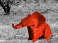 Evi's Elephant (Evi Binzinger) (Danielle Verbeeten) Tags: elephant art paper origami kunst danielle papier paperfolding papiroflexia folding olifant evi vouwen vouwkunst papierkunst papiervouwen binzinger danielleverbeeten